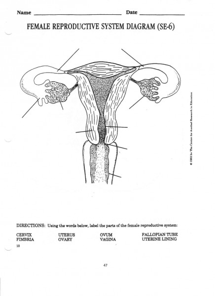 female reproductive system diagram blank