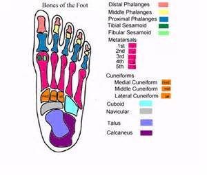 foot diagram for charting wounds