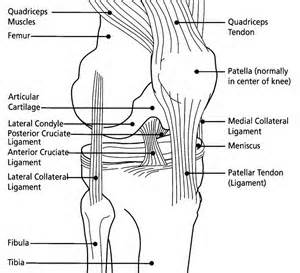 knee diagram acl