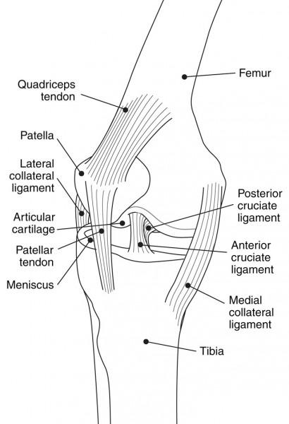 knee diagram pain