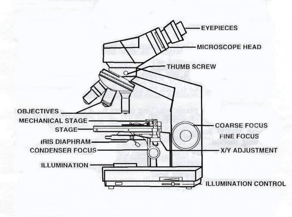 microscope diagram with labels