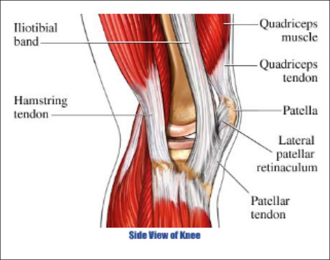 diagram of knee pain