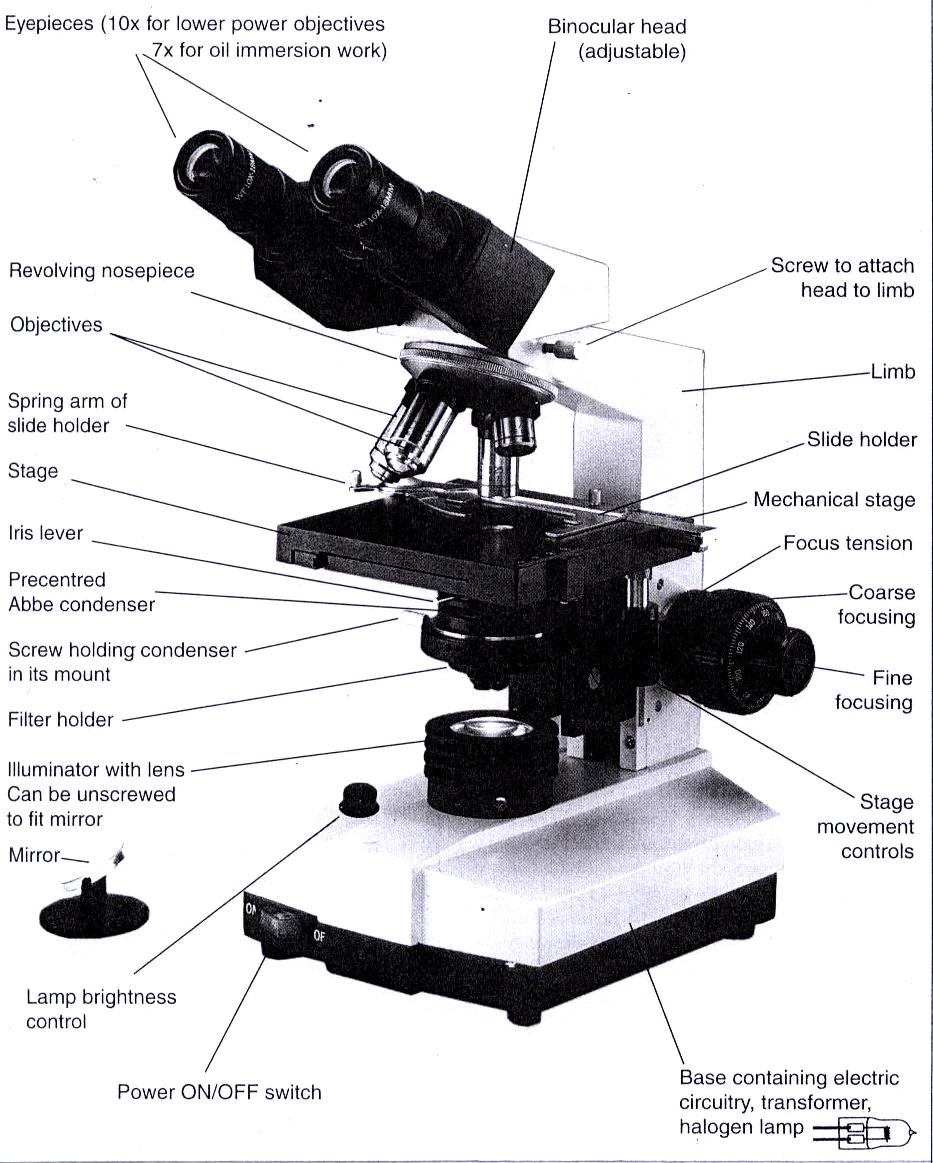 diagram of microscope for kids
