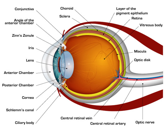 eyeball diagram labeled with descriptions
