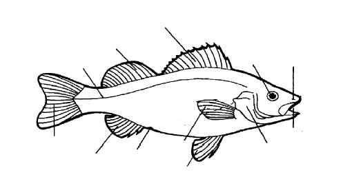 fish diagram tool exercise