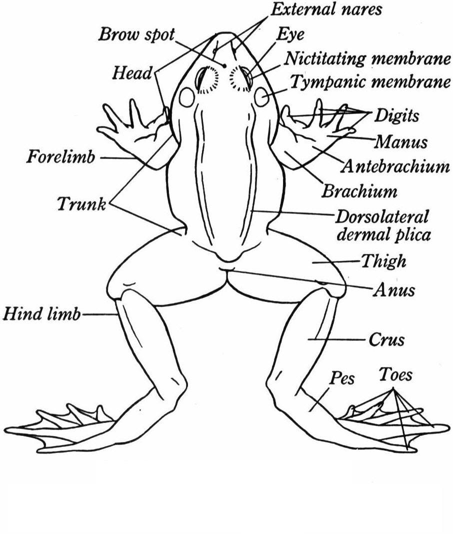 frog diagram quiz