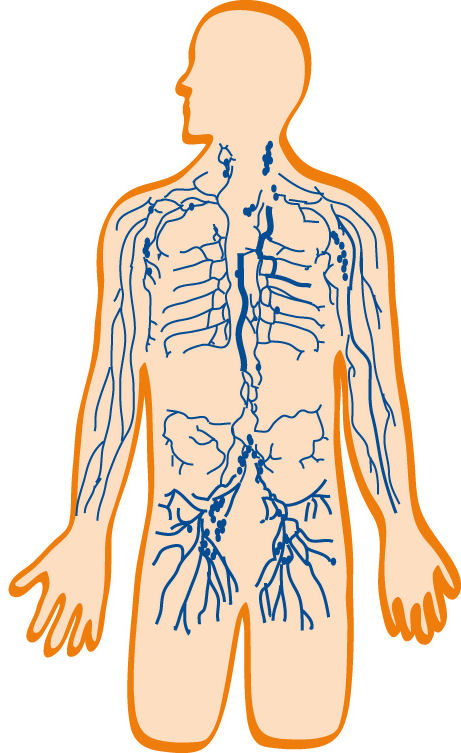 lymphatic system diagram labeled quiz