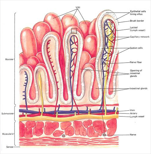 lymphatic system diagram worksheet