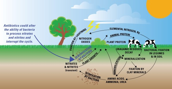 nitrogen cycle diagram worksheet