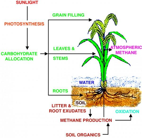plant diagram to label