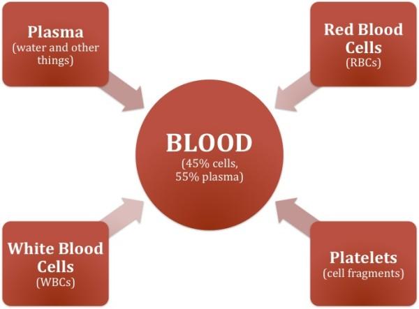 red blood cell diagram worksheet
