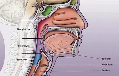 throat diagram uvula
