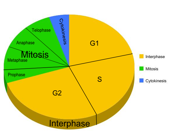 cell cycle diagram to label