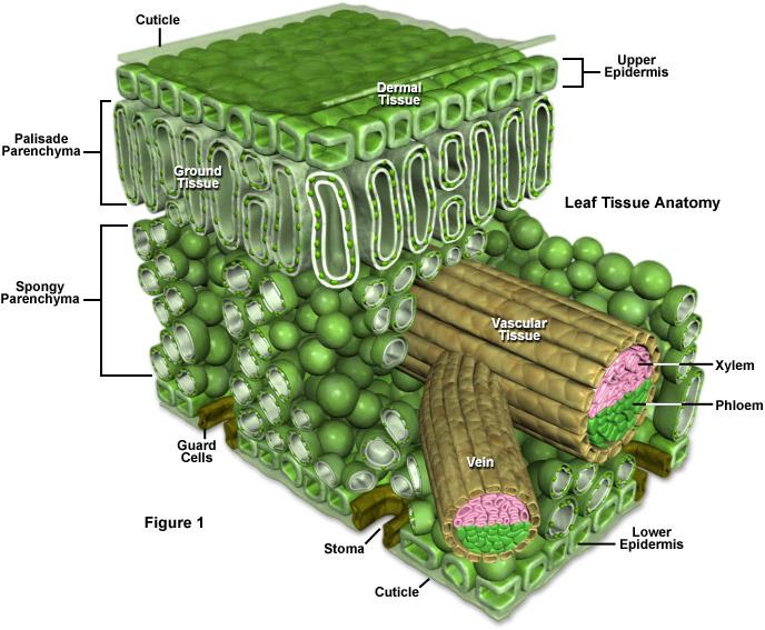 diagram of a leaf blower