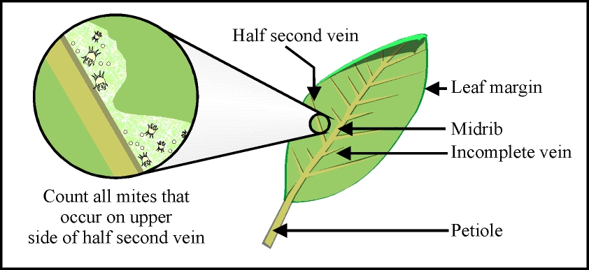 diagram of a leaf photosynthesis