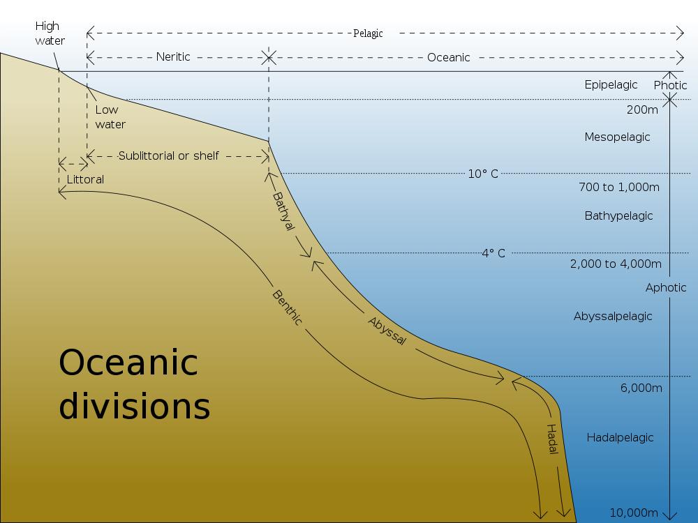 ocean floor diagram for students to label