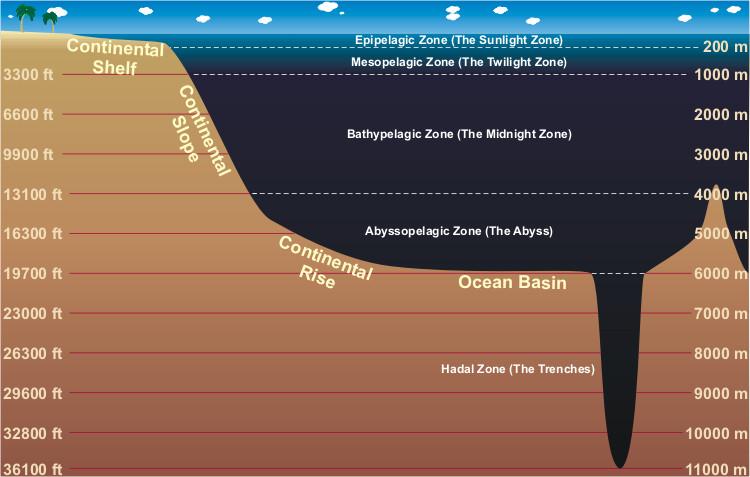 ocean floor diagram worksheet