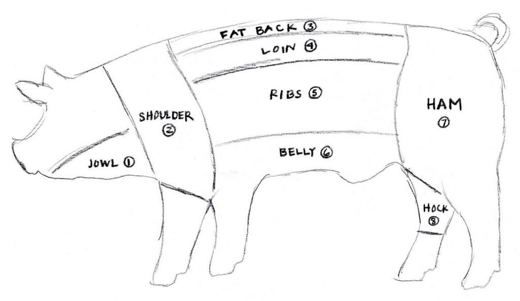 pig diagram dissection