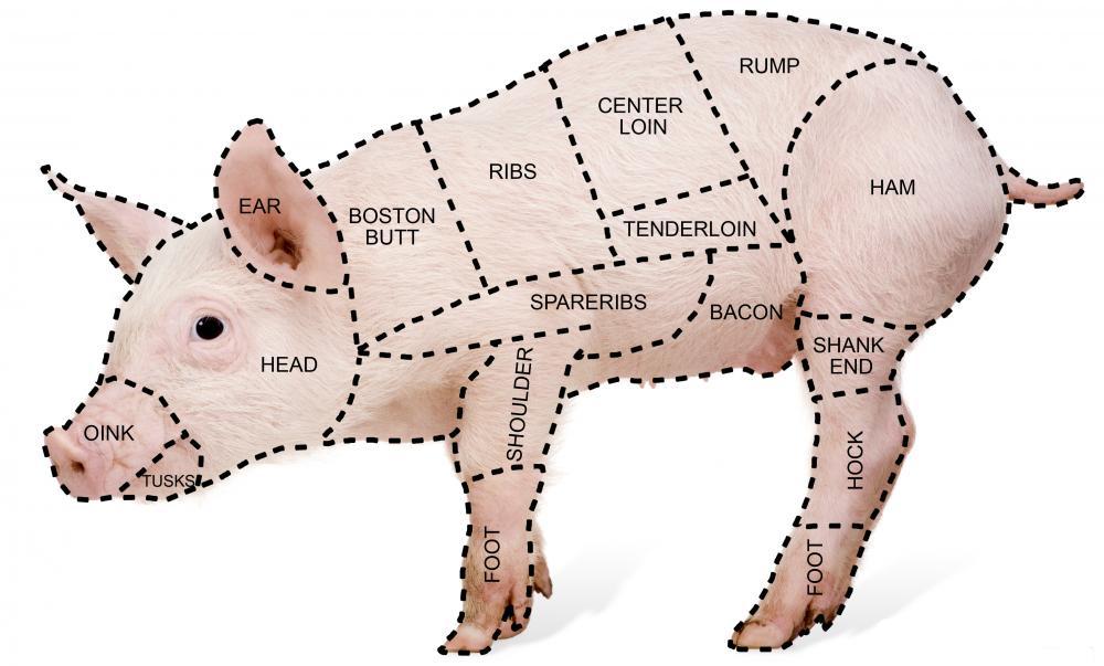 pig diagram inside