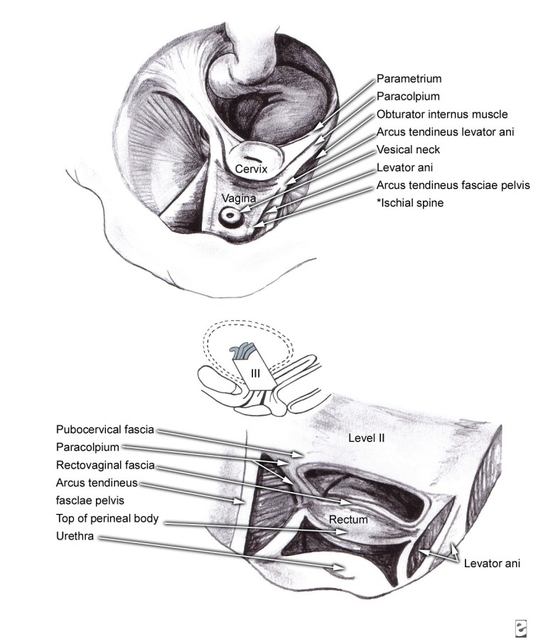 Female Genitalia Diagram Micro